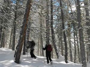 Randos journée, en raquettes à neige