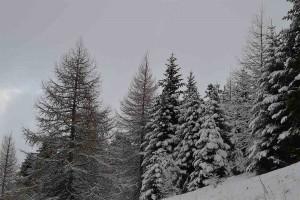 neige-ceuze2-2016