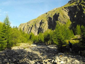 13-Ecrins-forets